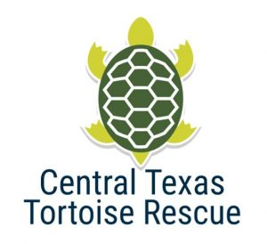 Virtual Strides Virtual Run - Central Texas Tortoise Rescue Tortoise Trot medal